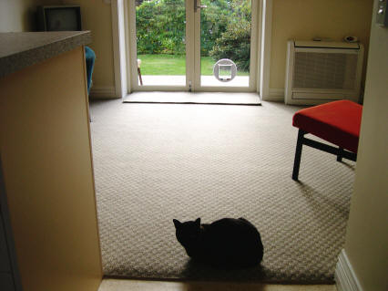Claudio has found the carpeted bit in the lounge/dining area - with handy cat door.